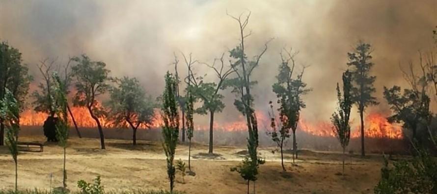 Interpelación Alcalde-Presidente para conocer motivos, la extensión, las sanciones y la actuación prevista en relación con el incendio acaecido el pasado 28 de junio en el Parque Lineal de Butarque