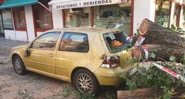 El PP exigirá al gobierno socialista un plan de arbolado riguroso y que resarza a los perjudicados por la caída masiva de árboles y ramas
